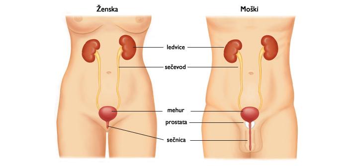 ledvice-m-z